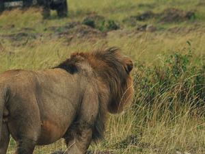Maasai Mara Explorer Fotos