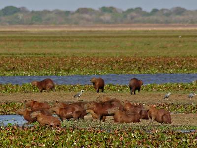 Hato La Fe, Calabozo, Llanos Of The Guarico State.