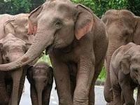 Srilankan Explore /Ran Holidays