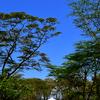 Lake Naivasha Country Club Lawns
