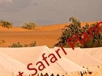 Desert Safari Planners