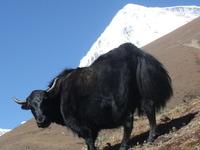 Bhutan Dragon Adventures