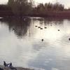 Lake In Sutcliffe Park