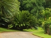 Peradeniya Royal Botanical Garden Way