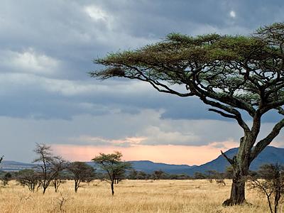 Serengeti By Pbase