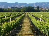 On Tour To Marlborough Vineyards