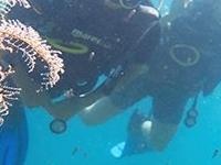 Diving Malta Gallery15diving Malta Gallery95 558046431041717 270424968146151999 N