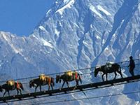 Annapurn