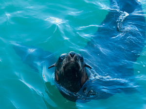Experience of Snorkel with Seals Tour Fotos