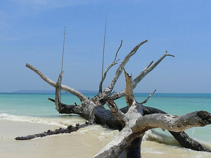 Andaman Family Tours Packages Photos
