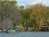 Acacia Trees Lake Naivasha
