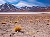 Altiplano Lagoon Miscanti