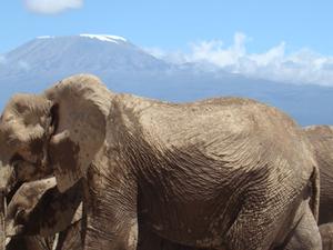 Tsavo West & Amboseli National Park Safari Fotos