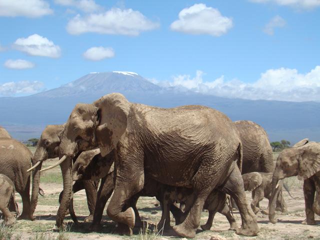 Tsavo West & Amboseli National Park Safari Photos
