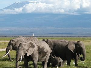 Magical Kenya Safari Fotos