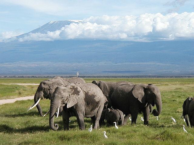 Magical Kenya Safari Photos