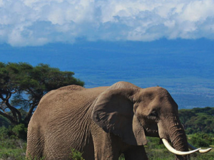 Amboseli Safari Package Fotos