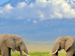 Fascinating Safari Fotos