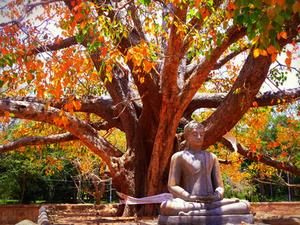 Cultural Tour - Sri Lanka Photos