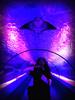 Aquarium&Dolphin Show