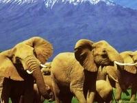 Arusha Travel Agency Ltd