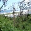 Valdivian Temperate Rain Forest