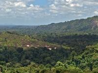 Central Suriname Nature Reserve
