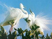 Bac Lieu Bird Sanctuary Natural Reserve