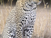Badrama - Usakothi Wildlife Sanctuary