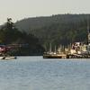 Beaver Salt Spring Harbour