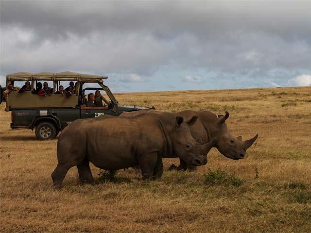 Unique Adventure Conservation Safari Photos