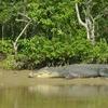 Bhitarkanika National Park Orissa Jpga