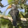 Thattekkadu Bird Sanctuary