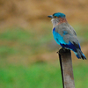 Birdie At Sundarbans