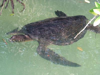 Black Turtle Cove, Galapagos