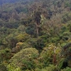 Amboro National Park