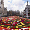 Brussels Floral Carpet