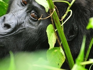 Best of Uganda Safari Tour Photos