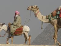 Bahareya - Farafra (White Desert) - Dakhla Oasis - Baris Oasis - Luxor