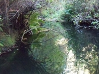 Carbonera Creek