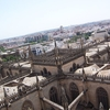 Cathedral Roofs As Seen From The Giralda