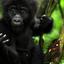 Gorilla Forest Camp Baby Gorilla