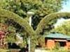 Chambal Garden