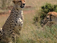 Exclusive Safaris in Kenya