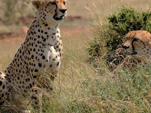 Exclusive Safaris in Kenya Photos