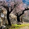 Cherry Blossom Cottage Sierra Aitana