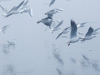 Chilika Wildlife Sanctuary