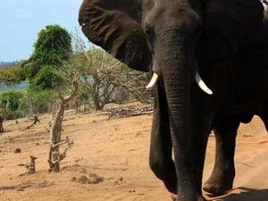 Victoria Falls & Chobe Luxury Experience