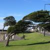 Clevedon Tree