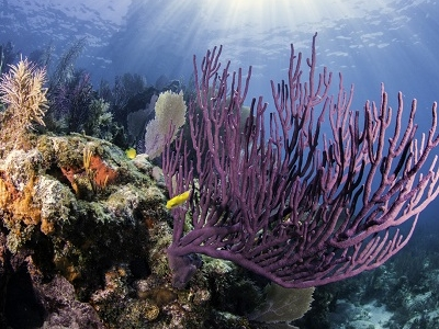 Colorful Coral In Key Largo FL